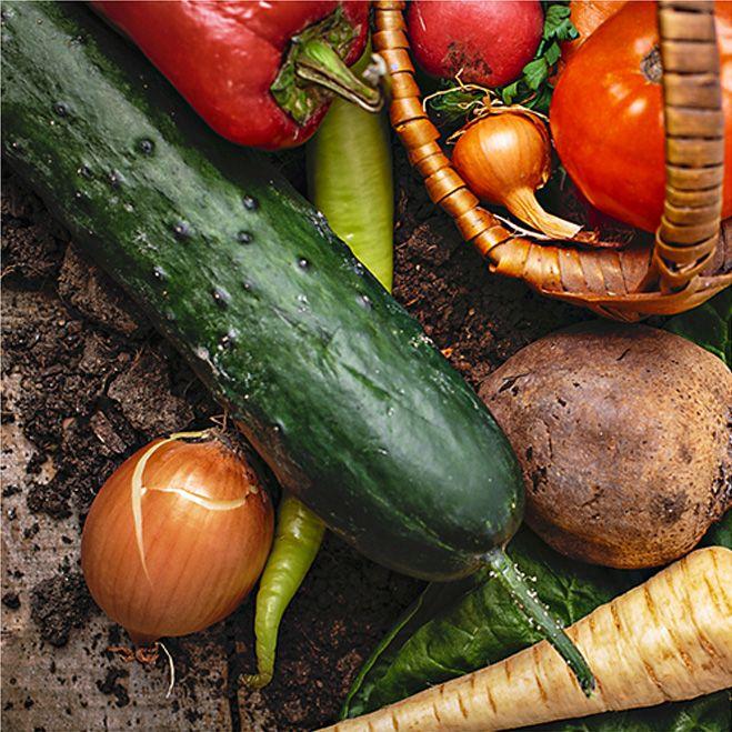 泉州の新鮮な野菜